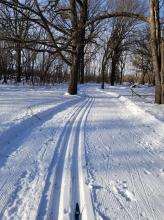 This image shows a cross country ski trail.