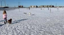 This image shows a young girl with some dogs during winter at dog park.